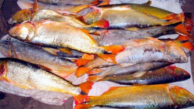 Denuncian que la depredación de pescadores paraguayos en el Paraná es