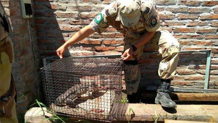 Dos niños hallaron una Iguana cuando jugaban en el patio de su casa en Paraná