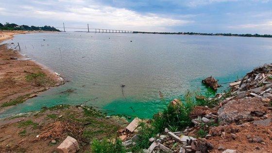 Cianobacterias en el río: efectos en salud, en peces y riesgo en tomas de agua