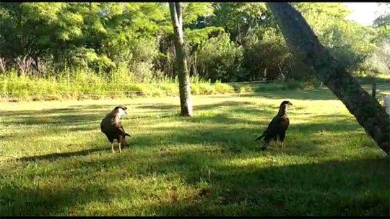 Liberaron en reserva natural a los animales que estaban en la granja de Avelino