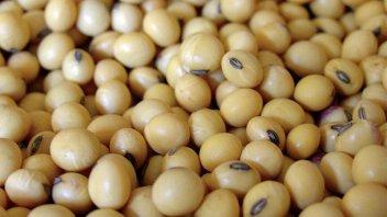 La soja cayó 3% y cerró debajo de los u$s600 tras su récord en casi una década