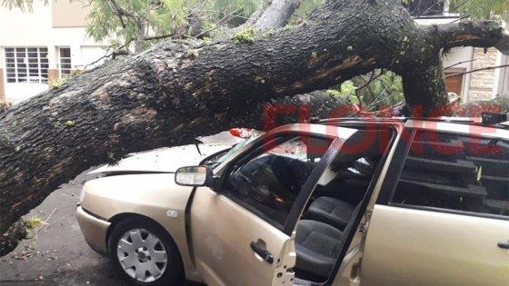 Un árbol de gran tamaño cayó sobre dos autos en Paraná: uno iba en marcha