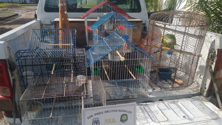 Incautaron pájaros en una vivienda y hallaron especie en peligro de extinción