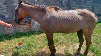 Rescataron un caballo que quedó tendido cuando tiraba un carro en Paraná