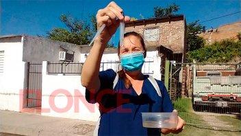 Dengue: hallaron larvas del mosquito Aedes en una recorrida por barrios