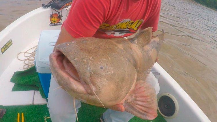 Pescaron rara especie de Manguruyú en Villa Urquiza: video de la devolución