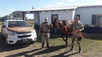 Recuperaron un caballo de carrera que había sido denunciado como robado