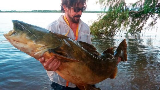 Increíble pesca de un manguruyú de un metro y medio de largo en el río Paraná