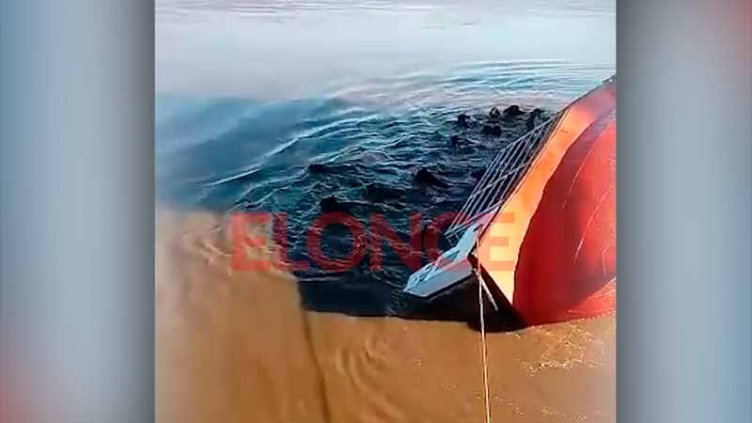 Barco que transportaba animales dio vuelta campana: Murieron más de 20 vacunos