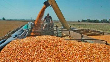 """Afirman que la soja y el maíz tienen el """"poder de compra"""" más alto en 15 años"""