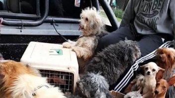 Allanaron un criadero y encontraron 40 perros  en pésimas condiciones sanitarias