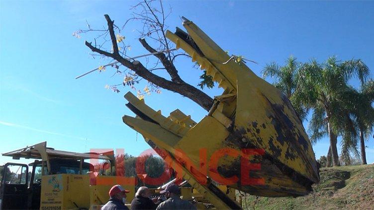 Video: así trasplantan árboles de calle Racedo en plaza Mujeres Entrerrianas
