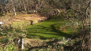 Denuncian grave contaminación de un arroyo y piden que se investigue