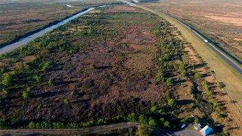 Las zonas del Delta afectadas por incendios recuperan de a poco la vegetación