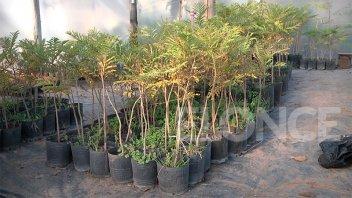 El Vivero Municipal hará entrega de árboles a vecinos de Paraná