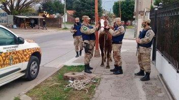 Recuperaron caballo robado del predio del ex hipódromo donde era cuidado