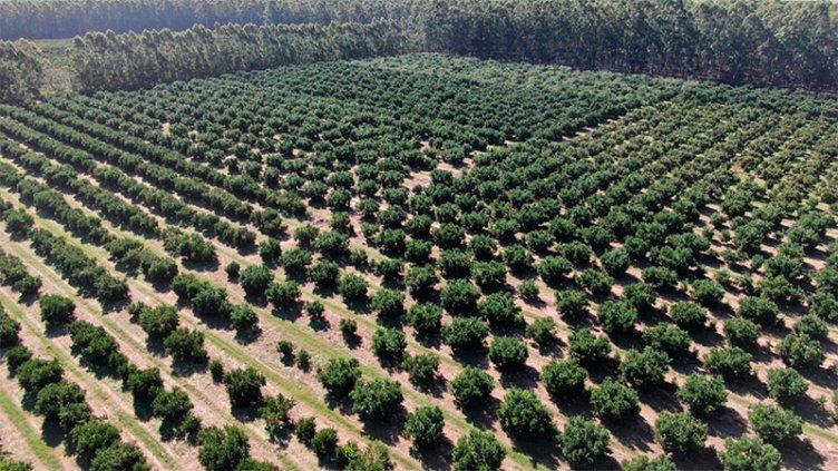 Bordet valoró extensión y ampliación de beneficios para la producción citrícola