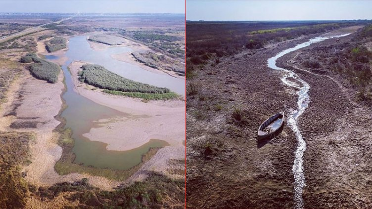 """Bajante del Paraná: """"El humedal se parece más a un campo seco"""""""