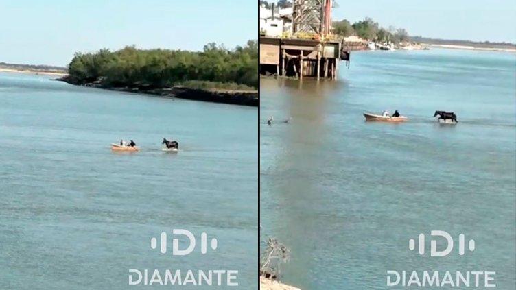 Video: caballo cruza el río Paraná caminado hasta la costa en Diamante