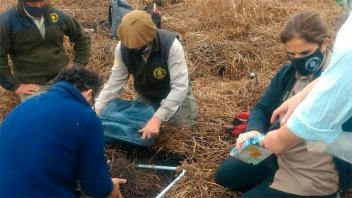 Hallan evidencias de ocupación de pueblos originarios en el Parque Pre-Delta