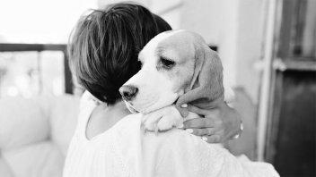 En una causa por violencia de género emitieron una cautelar por las mascotas