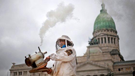 Reclamo y alerta de productores de miel contra transgénicos y agroquímicos