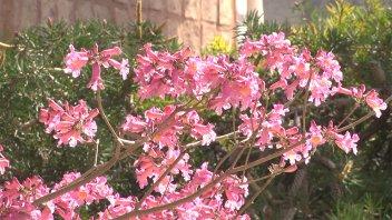 Los colores de la primavera: imágenes de la estación de las flores en la ciudad
